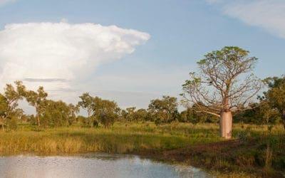 Birdwood Downs, Australia