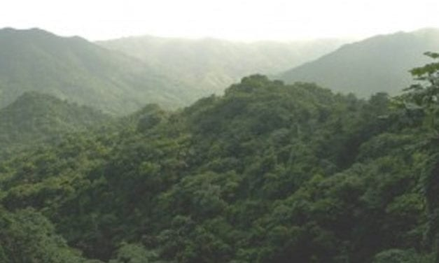 Tropic Ventures Sustainable Forestry Project in Puerto Rico