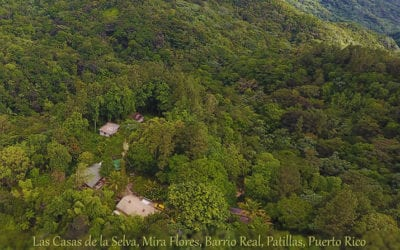 Ecotechnics Award Winning Sustainable Forestry Project, Heavily Damaged by Hurricane Maria