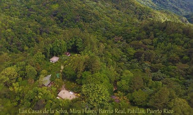 Ecotechnics Award Winning Sustainable Forestry Project, Heavily Damaged by Hurricane Maria