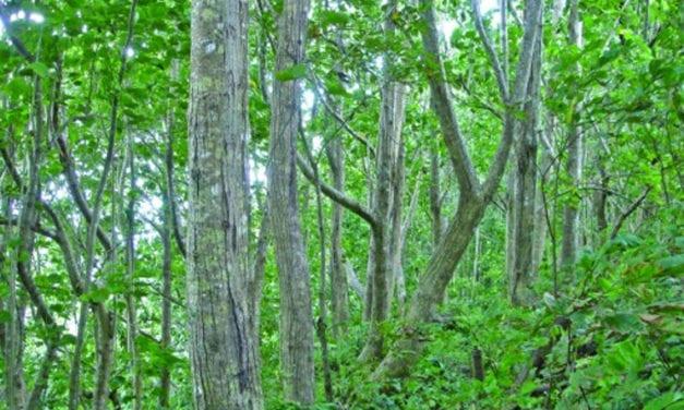 Las Casas de la Selva – Rainforest Enrichment Project